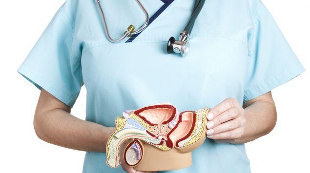 Eine Ärztin hält eine Abbildung der männlichen Geschlechtsorgane vor sich