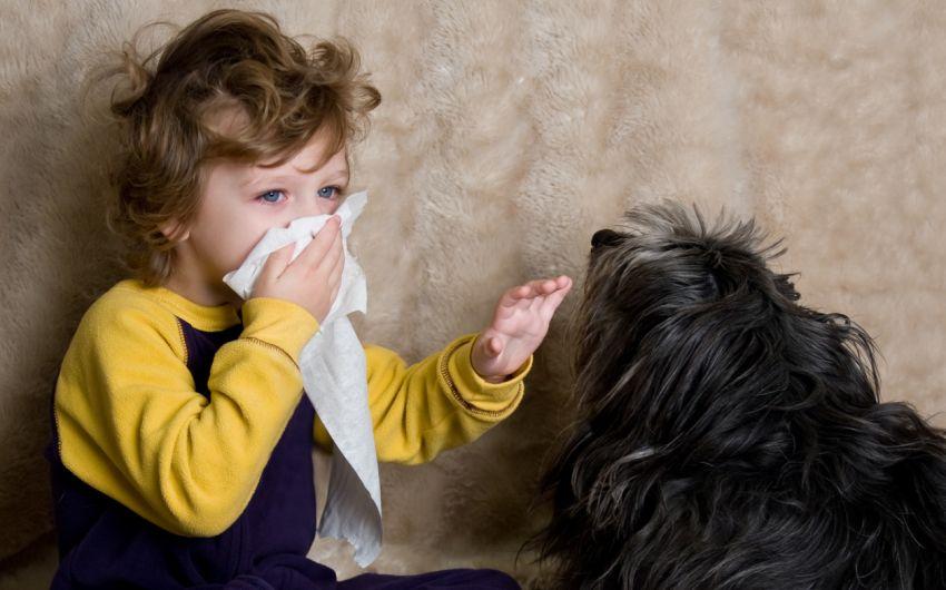 Ein Junge streichelt einen Hund und niest.