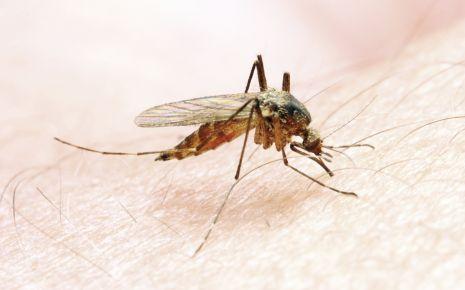 Malaria: Man sieht eine Anophelesmücke auf der Haut.