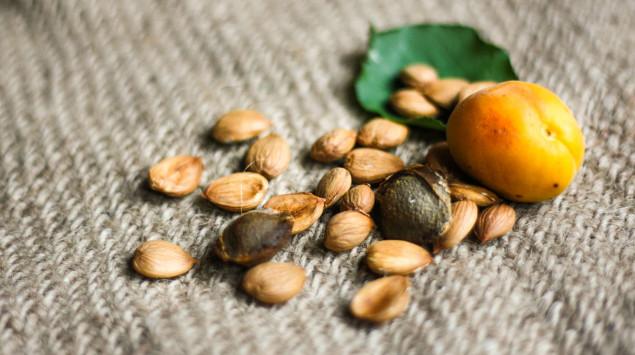 Aprikosenkerne: Schützt Vitamin B17 wirklich vor Krebs?