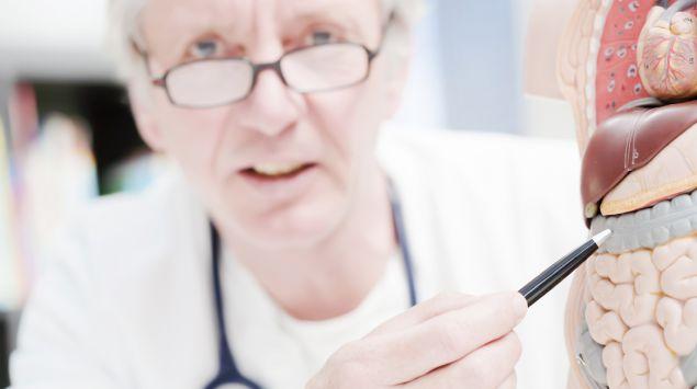Ein Arzt mit einem Modell des Darms.