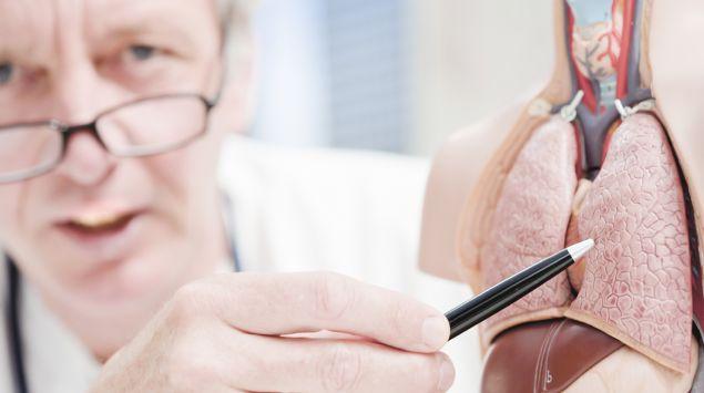 Ein Arzt zeigt an einem medizinischen Modell auf die Lunge.