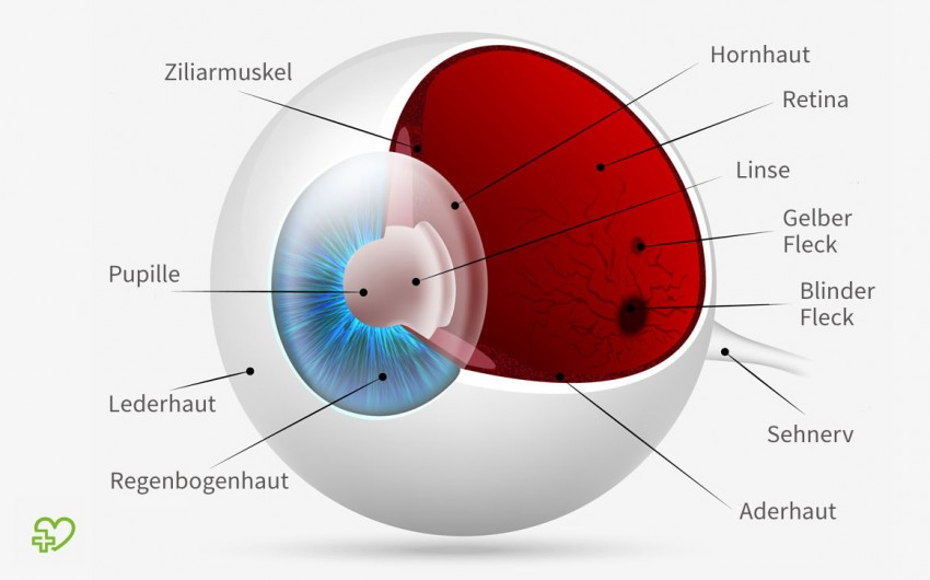 Anatomie: Aufbau des gesundes Auges