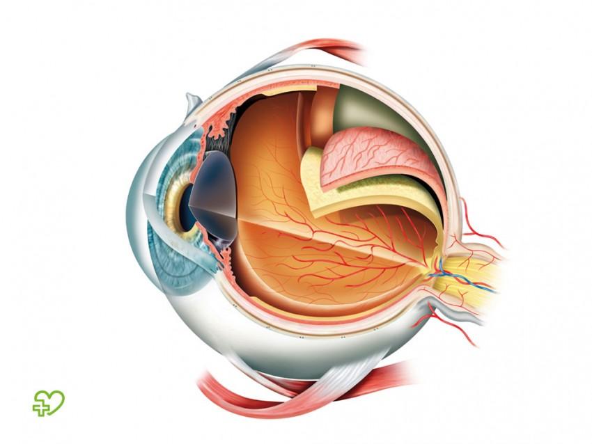 Berühmt Auge Anatomie Spiel Fotos - Menschliche Anatomie Bilder ...