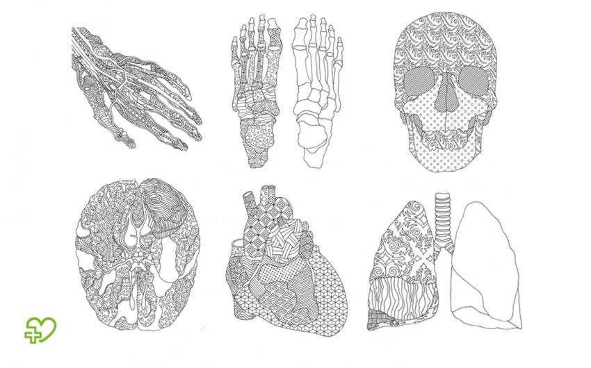Bilder zum Ausmalen: Kollage der anatomischen Ausmalbilder
