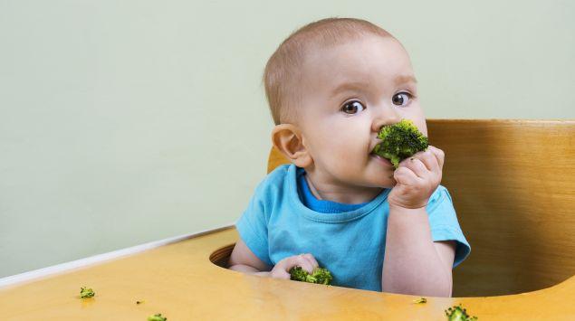 Ein Baby sitzt im Hochstuhl und isst Brokkoli mit den Fingern.