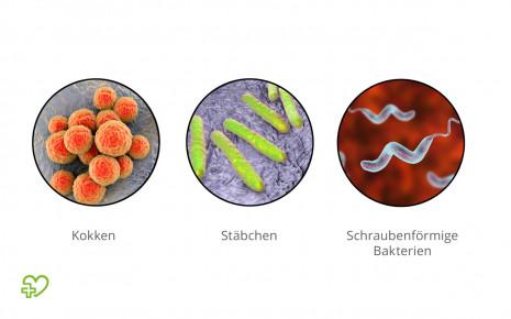 Überblick über die Grundformen von Bakterien