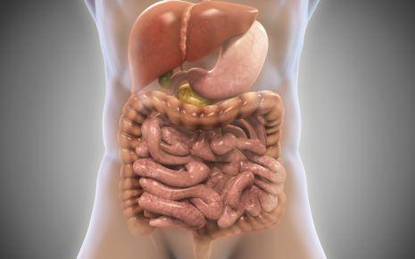 Auf dem Bild sind die Bauchorgane des Menschen grafisch dargestellt. Ein entzündetes Bauchorgan kann unter Umständen zu einer Bauchfellentzündung führen, die Blinddarmentzündung zum Beispiel ist die häufigste Ursache einer Peritonitis.
