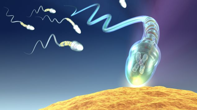 Man sieht Spermien auf dem Weg zur Eizelle.