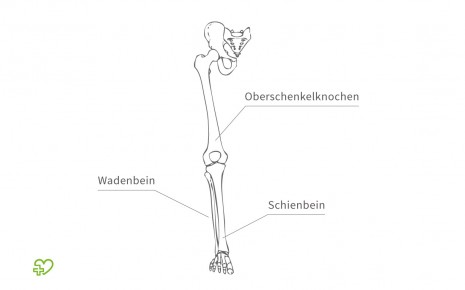 Das Skelett Beine - Onmeda.de