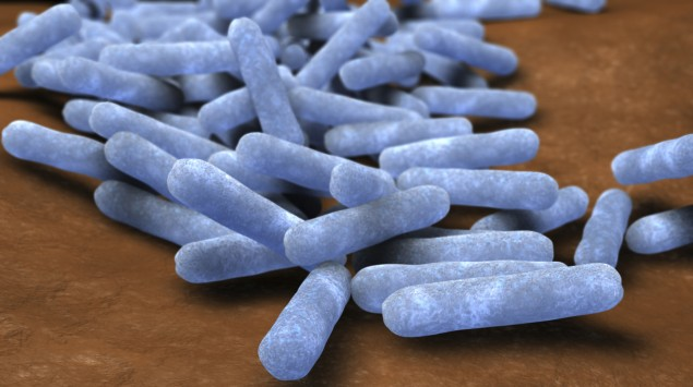 Man sieht stark vergrößerte Escherichia coli-Bakterien