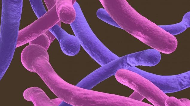 Man sieht eine Darstellung der Pilzart Candida albicans.