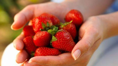 Das Bild zeigt zwei Hände voll Erdbeeren.