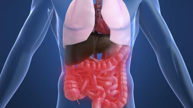 Man sieht die inneren Organe eines Menschen.