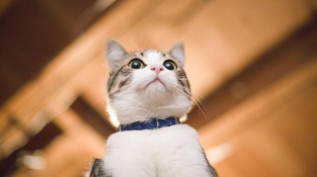 Eine Katze.