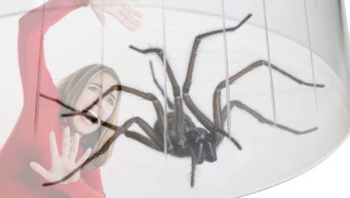 Eine große Spinne unter einem Glas, im Hintergrund eine ängstliche Frau.