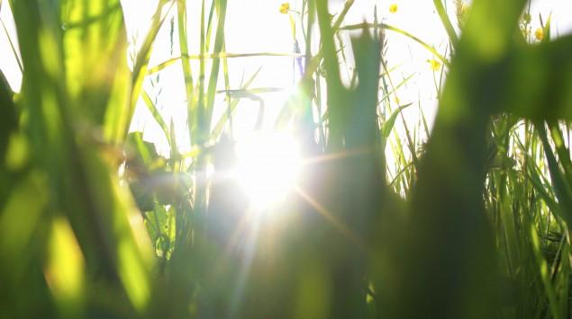 Sonnenlicht scheint durch Gräser auf einer Wiese.