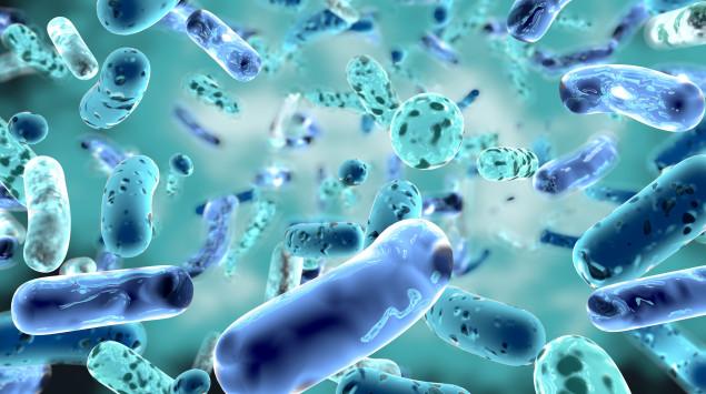 Bakterien unterscheiden sich untereinander in vielen Dingen: Man sieht eine Illustration von Bifidobakterien.