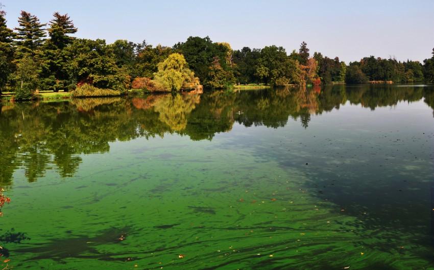 Massenhaftes Auftreten von Blaualgen in einem See