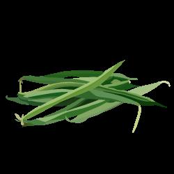 Bohnen, grün