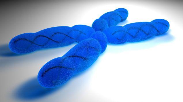 Schematische Darstellung eines Chromosoms.