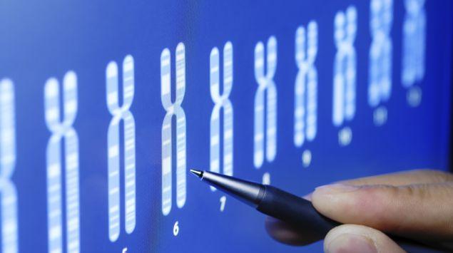 Man sieht mehrere Chromosomen.
