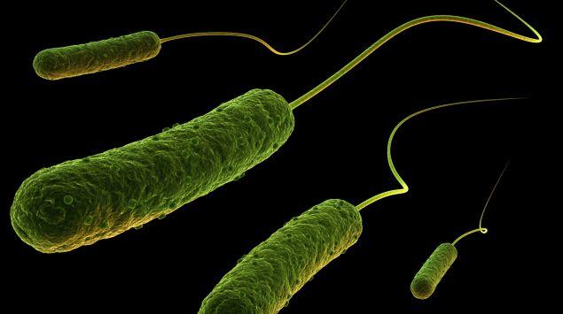 Man sieht stäbchenförmige Bakterien mit Geißel.
