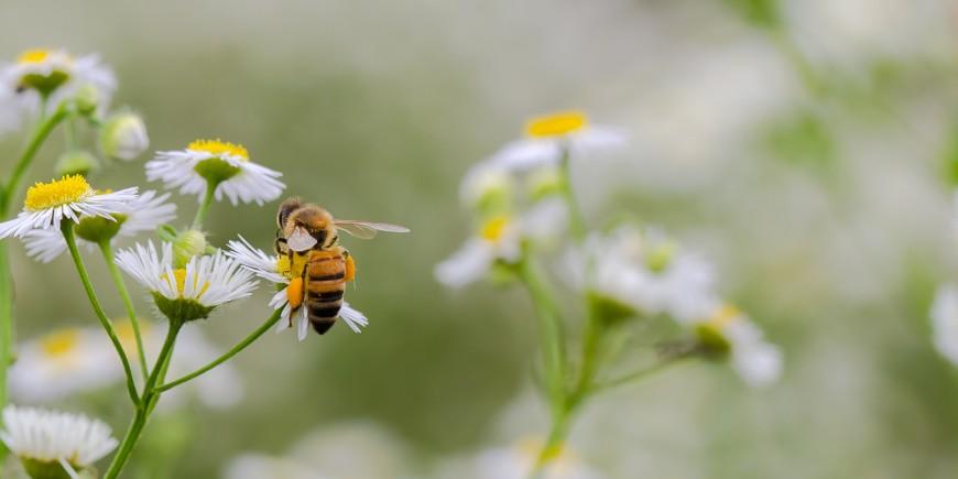 Qué hacer ante una picadura de avispa o abeja? - Onmeda.es