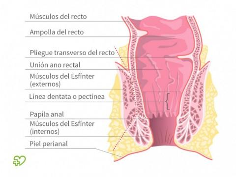 Cáncer de ano Definición - Onmeda.es