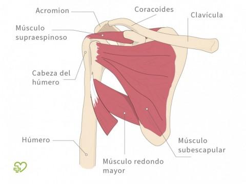 dolor en cara anterior de hombro