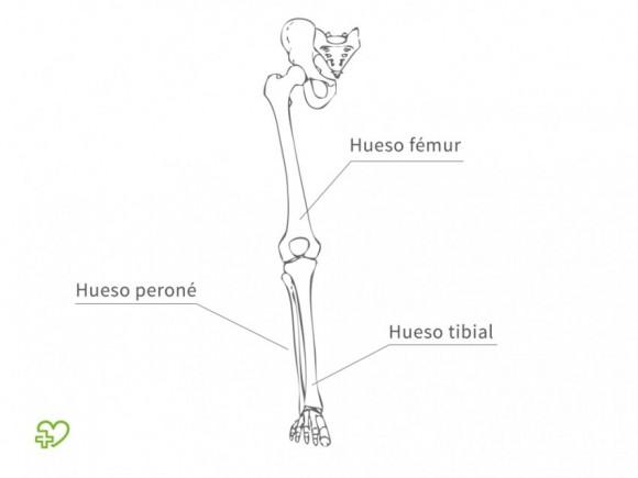 El esqueleto Las piernas - Onmeda.es