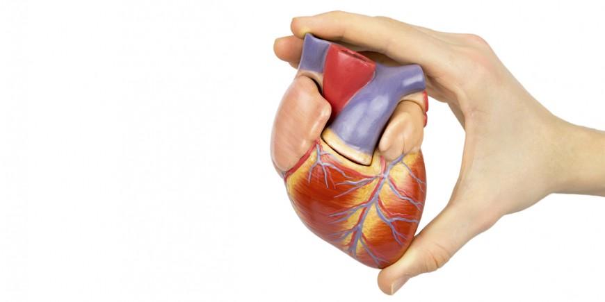 Anatoma del corazn  Onmedaes