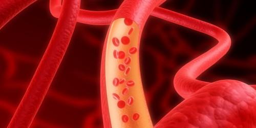 Anatomía de los vasos sanguíneos - Onmeda.es