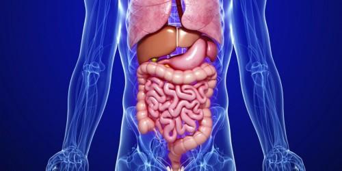 Dieta para diverticulos en el intestino