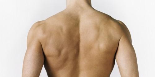 Anatomía de los hombros - Onmeda.es