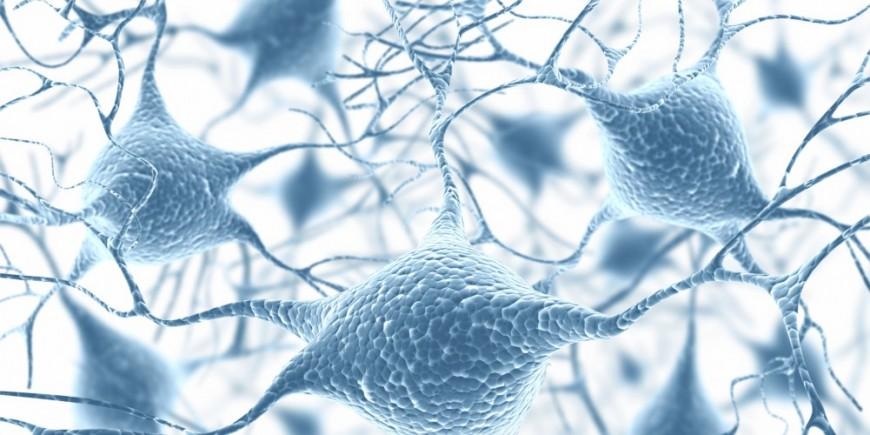 Sistema nervioso vegetativo - Onmeda.es