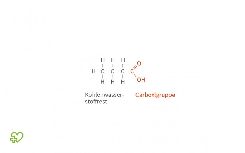 die chemische grundstruktur einer fettsure - Ungesattigte Fettsauren Beispiele