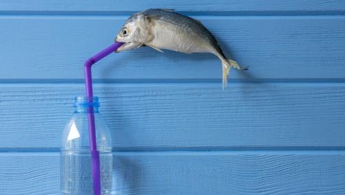 Ein toter Fisch hängt an einem Strohhalm, der in einer Plastikflasche steckt.