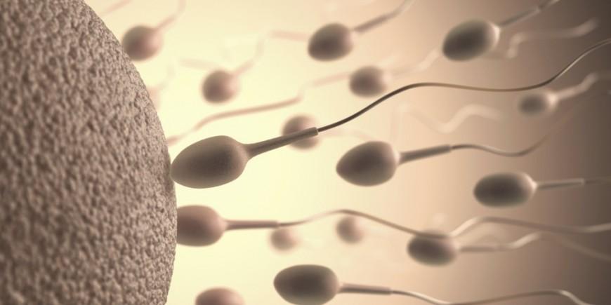rencontre spermatozoide ovule combien temps Nantes