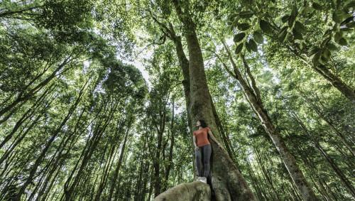 Eine junge Frau steht im Wald.