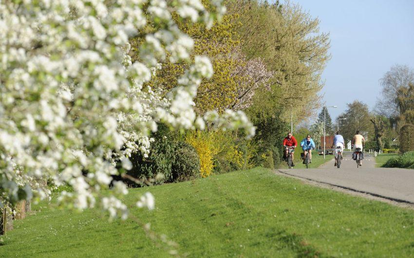 Frühjahrsmüdigkeit: Man sieht Radfahrer in frühlingshafter Umgebung.