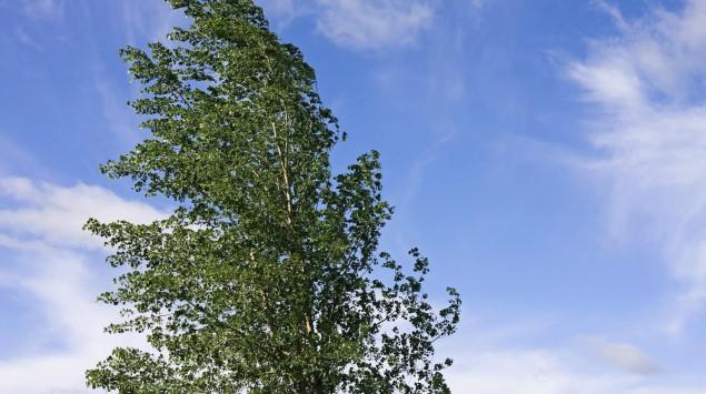 Eine Baumkrone wiegt sich leicht im Wind.