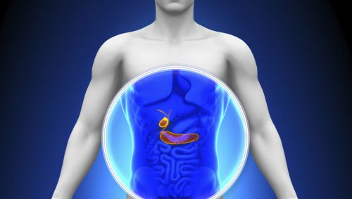 Illustration: Darstellung der Gallenblase im menschlichen Körper.