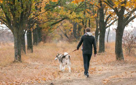 Spazierengehen mit dem Hund ist erlaubt – sofern es den Genesungsprozess nicht verzögert.