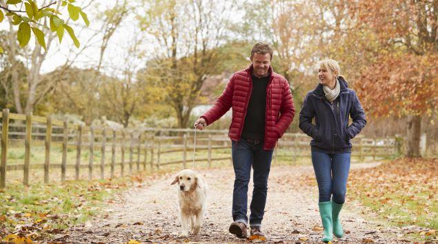 Ein Mann und eine Frau mittleren Alters gehen an einem Herbsttag mit einem Golden Retriever spazieren.