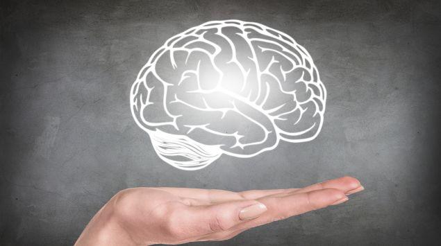 Das Bild zeigt eine Illustration des Gehirns.