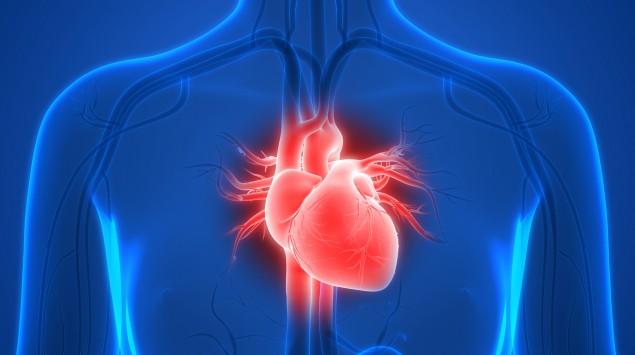 Herz - Anatomie und Physiologie: Man sieht eine schematische Darstellung des Herzens