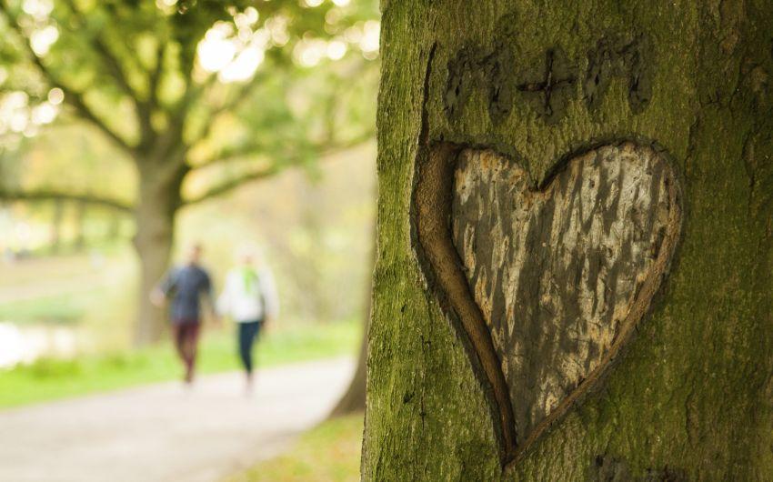 Frühlingsgefühle: Man sieht ein Herz, das in einen Baum geritzt wurde und im Hintergrund ein spazierendes Pärchen.