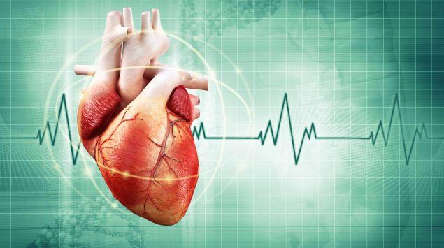 Eine Illustration des menschlichen Herzens.