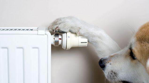 Ein Hund am Regler einer Heizung.